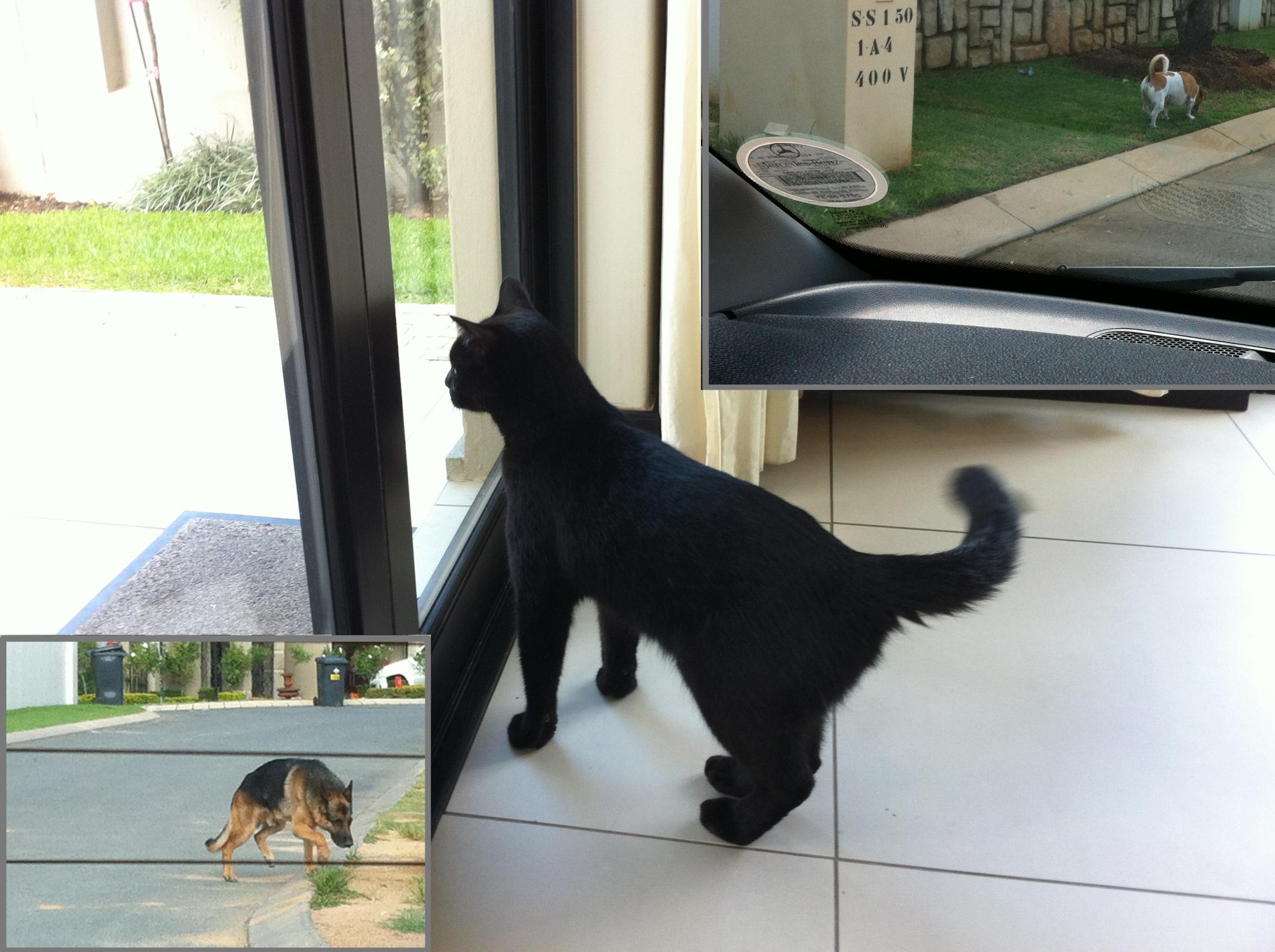 Damien locked inside - Dogs roaming the estate unleashed